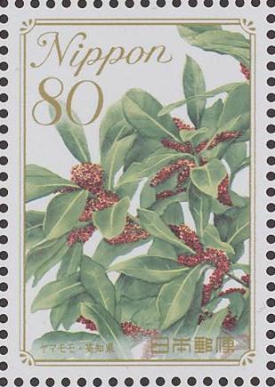 Myricaceae ヤマモモ科