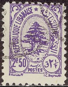 レバノンスギの画像 p1_31
